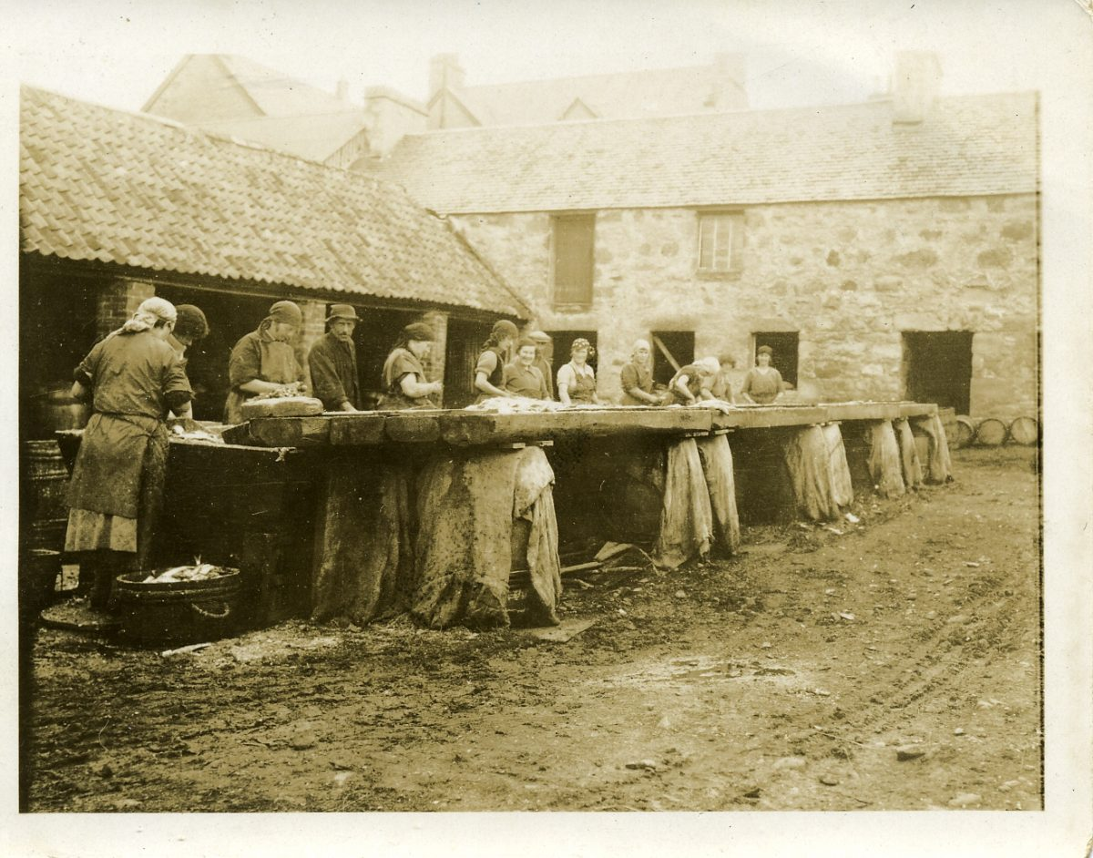 A group of women gutting the herring at Helmsdale, c.1930s.
